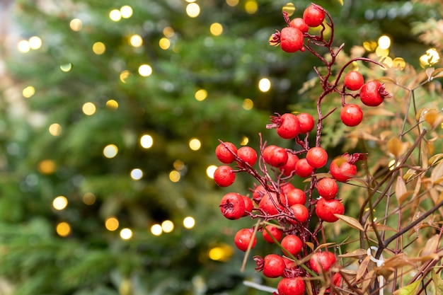 Red holly berries on fur tree background with bokeh lights. christmas backdrop with copy space.