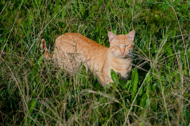 Red homeless cat on green grass
