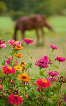 Красная лошадь ест зеленую траву на поле рядом с домом и деревьями на открытом воздухе в летней сельской местности