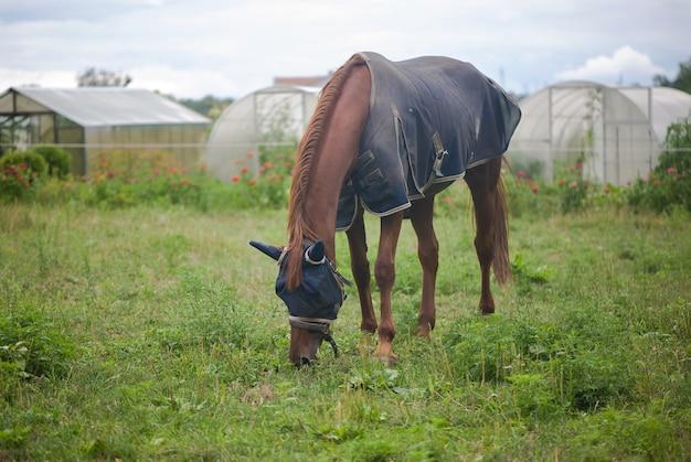 Красная лошадь ест зеленую траву на поле рядом с домом и деревьями на открытом воздухе