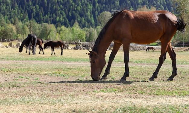 Красная лошадь пасется на пастбище