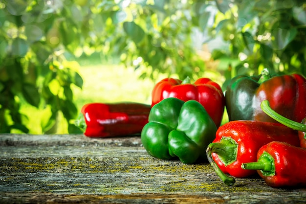 Red hot vegetable chili pepper and sweet pepper varieties of assorted
