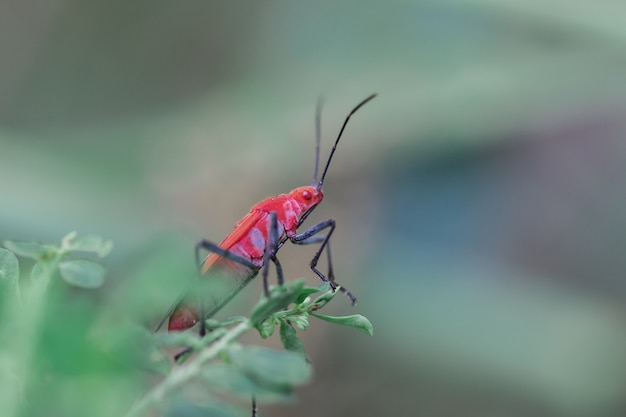 Red insect on a branch