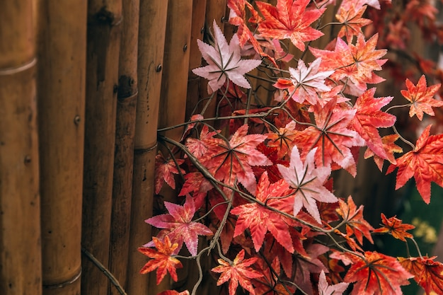 Red japanese maple leaves decorated with bamboo background