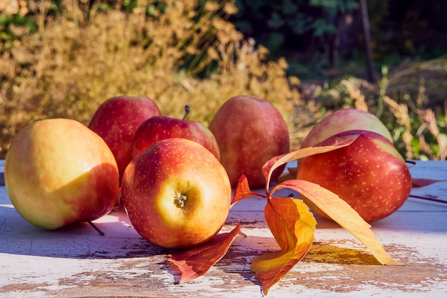 Red juicy ripe apples on an old wooden table against the background of autumn nature