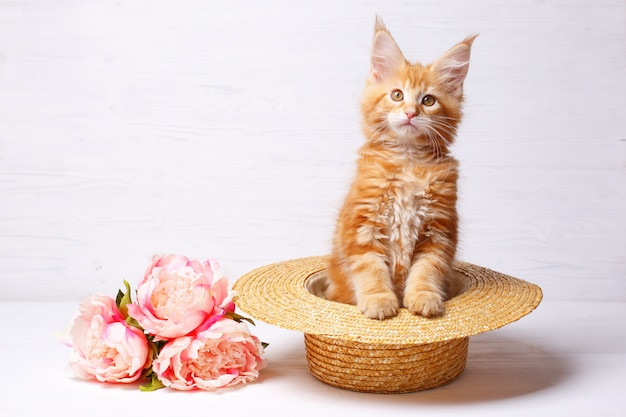 Red kitten maine coon sitting in a straw hat