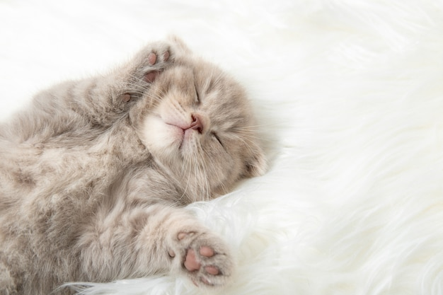Red kitten sleeping on a white rug. close-up