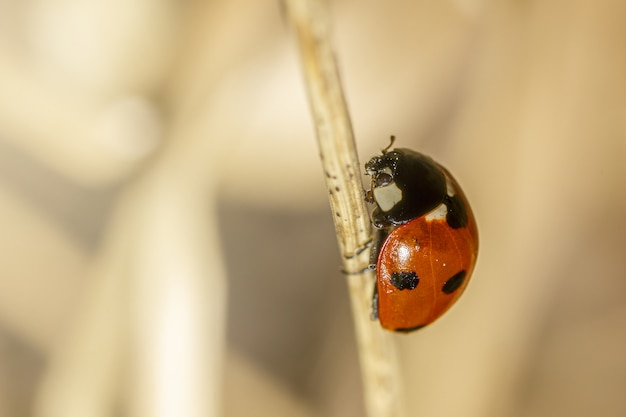 小枝に赤いてんとう虫をクローズアップ
