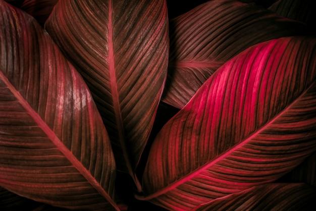 Red leaf background nature background concept