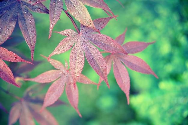 클로즈업 사진에 붉은 잎
