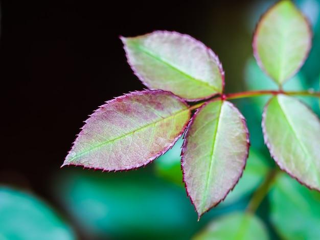 Красный лист в осеннем саду размытый естественный фон