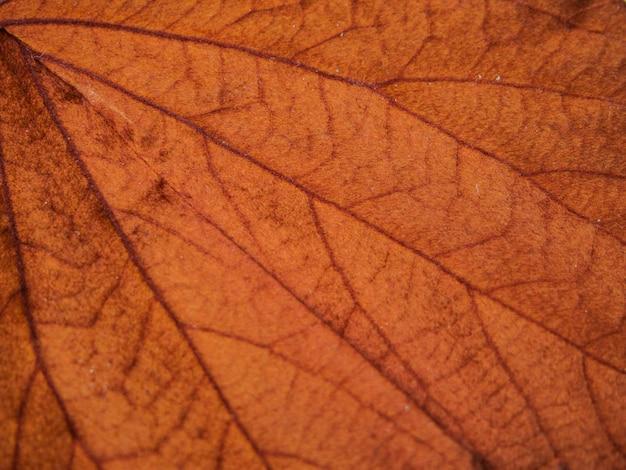Красный лист текстуры фона