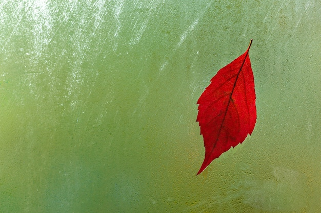 Red leaf on wet window. green natural background