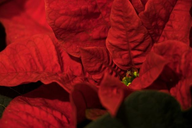 Red leafs flower macro