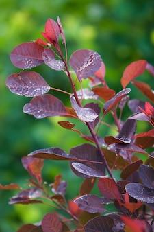 Красные листья с каплями после дождя на зеленом размытом фоне. стебли-ветви тоже красноватые. капли сверкают. выборочный фокус. вертикальная рамка.