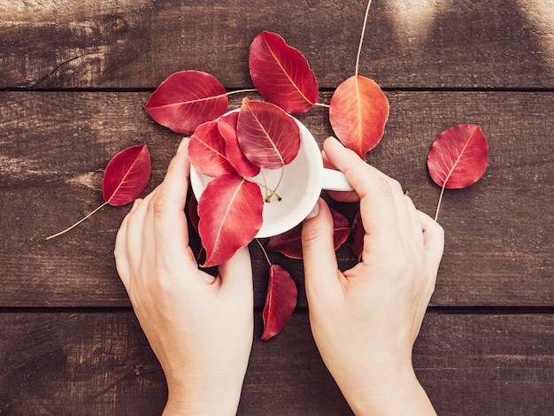 Red leaves, women's hands, cup of coffee