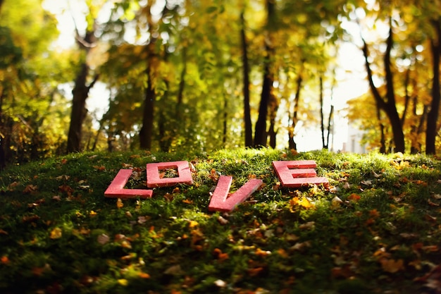 Red letters 'love' lies on grass in forest
