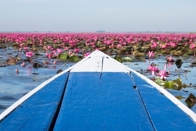 Красное цветение цветка лотоса в озере невидимое путешествие udonthani таиланд