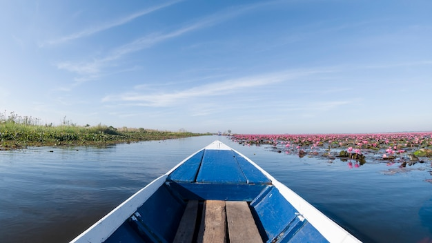 Red lotus flower bloom in lake unseen travel by boat udonthani thailand