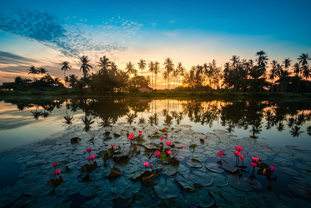 Red lotus flower and silhouette coconut palm trees at sunrise in nakorn si thammarat, thailand.