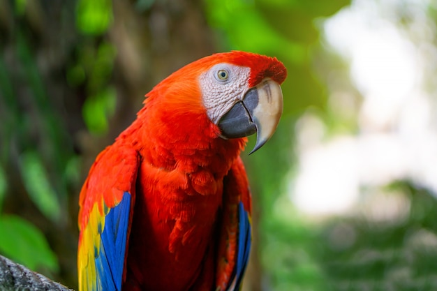 Red macaw parrot is sticking on branches