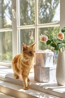 赤いメインクーン猫は、花瓶の花瓶の近くの日当たりの良い夏の光の中で窓辺を歩きます