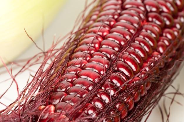 빨간 옥수수 또는 옥수수 과일과 씨앗 흰색 배경에 고립.