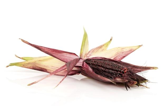 붉은 옥수수 또는 옥수수 과일과 씨앗 흰색 표면에 격리.