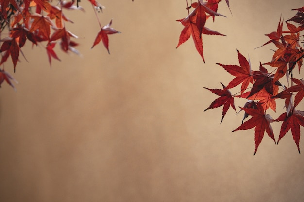 Red maple leaf against brown background
