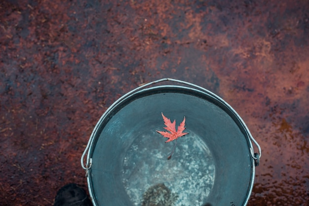 A red maple leaf floats on the surface of the water in a tin bucket.