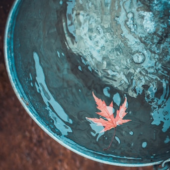 A red maple leaf floats in a tin bucket on the surface of the water