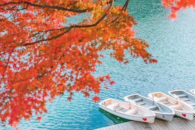 Red maple leaf on goshikinuma or five colored pond.  a popular destination in bandai highlands in autumn in fukushima prefecture, japan