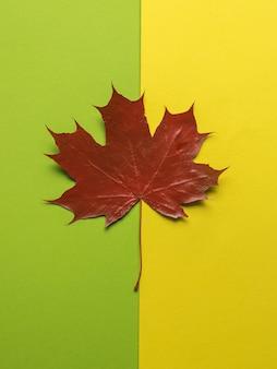 緑と黄色の背景に赤いカエデの葉。フラットレイ。