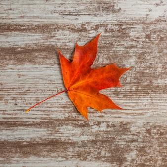 赤いカエデの葉は秋に。木の表面に