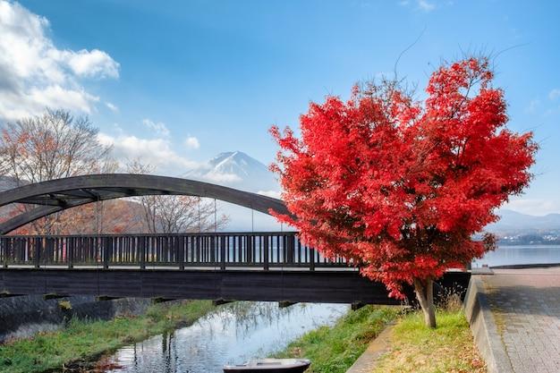 가와구치 코 호수의 후지산 붉은 단풍 나무 하트 모양