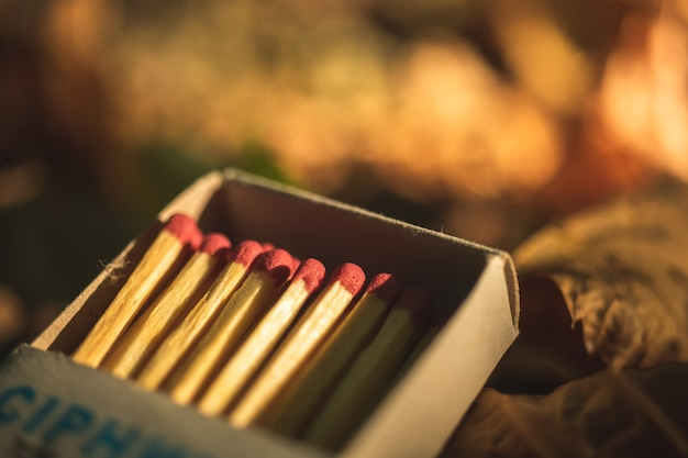 Red matches in box on dry forest leaves photo