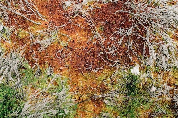 森の中の赤い苔。