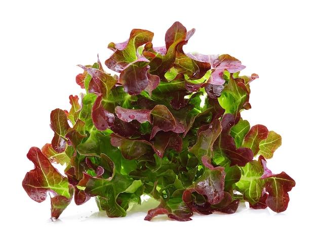 Салат красных дубовых листьев с каплями воды, изолированные на белом фоне.
