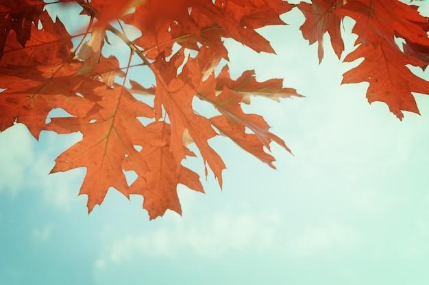Красные дубовые листья в осеннем парке на ярко-синем небе, в стиле ретро