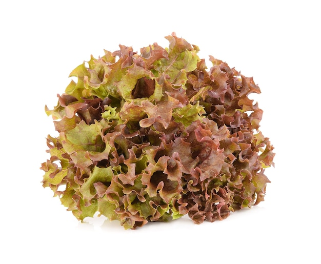 Red oak lettuce isolated on white background