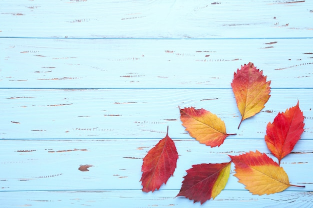 Red and orange autumn leaves on a blue table background