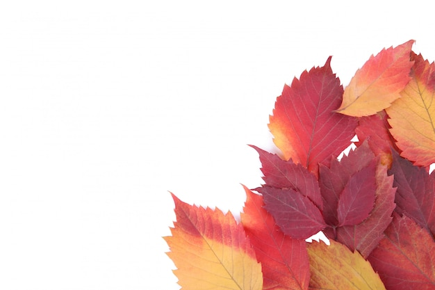 Red and orange autumn leaves isolated on white