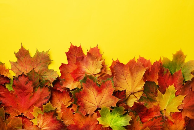Red, orange and green maple leaves on yellow background.
