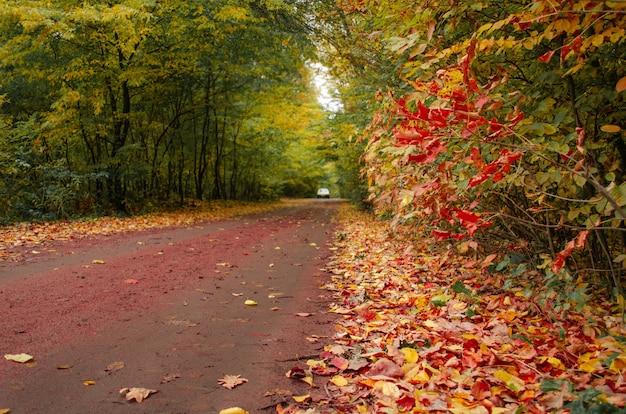 가을 도로에 빨간색, 주황색, 녹색, 노란색 나무. 풍경 사진 모험.