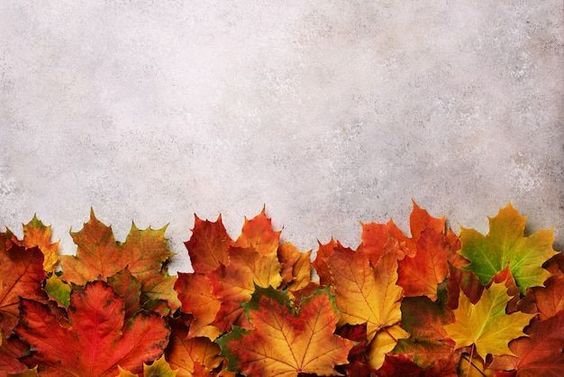Red, orange, yellow and green maple leaves on gray concrete background.