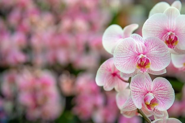 Красная орхидея в цветочном магазине. копировать пространство