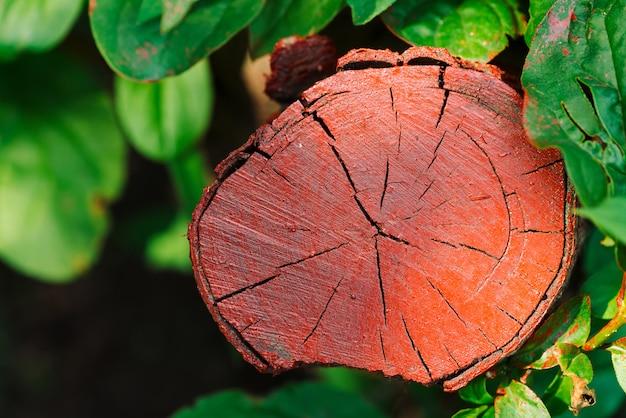 鮮やかな緑の葉の中で赤い塗られた木質の切り株ベンチ。茂みの中で赤い材木。赤いペンキの斑点の赤い木の丸太と緑の葉とカラフルな背景。自然に害を及ぼす。