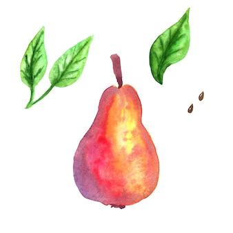 赤梨と緑の葉。手描きの水彩イラスト。孤立。