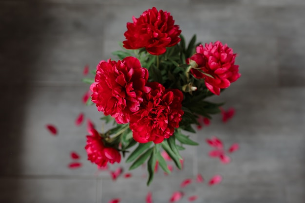 Red peonies bouquet isolated on gray background.