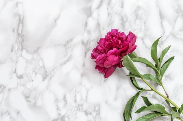 붉은 모란 꽃 흰색 절연
